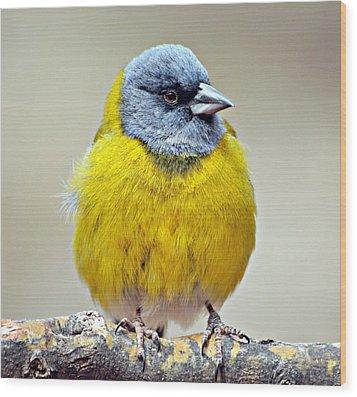 Ave Bird Wood Print by Edith Polverini