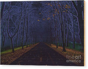 Avenue Of Trees Wood Print by Michal Boubin