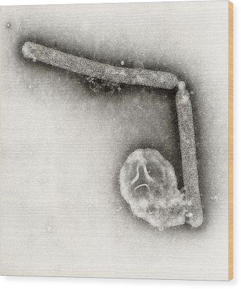 Avian Influenza A H5n1 Virions Wood Print by Everett