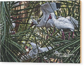 Wood Print featuring the photograph Aviary by Linda Constant