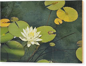Awaiting Monet Wood Print by Sandy Fisher