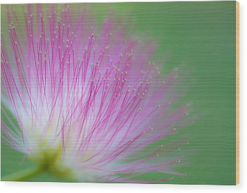 Awesome Blossom Wood Print