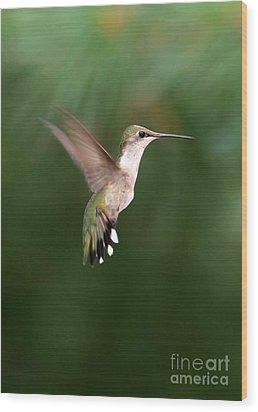 Awesome Hummingbird Wood Print by Sabrina L Ryan