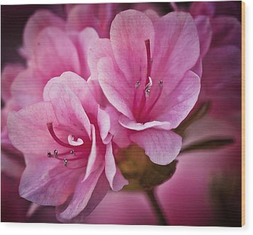 Azalea Fission One Wood Print by Michael Putnam