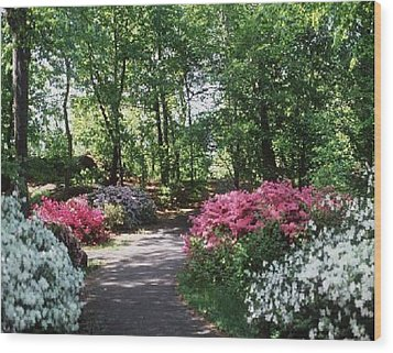 Wood Print featuring the photograph Azalea Path by Elizabeth Coats