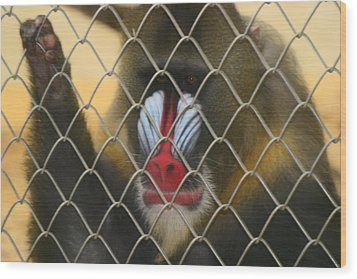Wood Print featuring the photograph Baboon Behind Bars by Kym Backland
