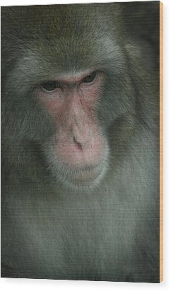 Baboon Wood Print by Cindy Haggerty