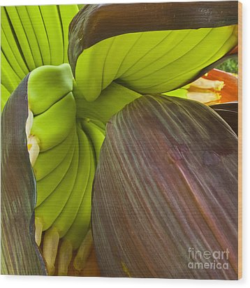 Baby Bananas Wood Print by Heiko Koehrer-Wagner