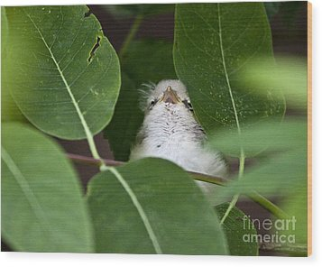 Wood Print featuring the photograph Baby Bird Peeping In The Bushes by Jeannette Hunt