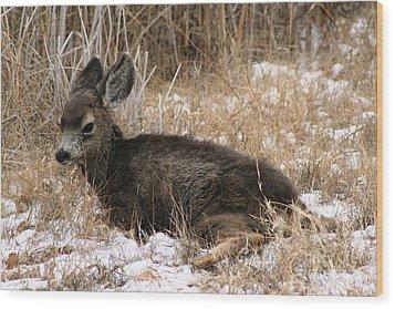 Baby Deer At Rest Wood Print by Nola Lee Kelsey