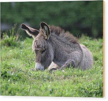 Baby Donkey Wood Print by Deborah  Smith