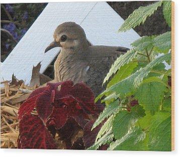 Baby Dove Wood Print