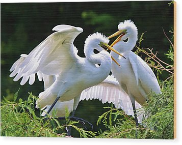 Baby Egrets In The Nest Wood Print by Paulette Thomas