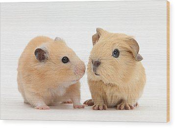 Baby Guinea Pig And Golden Hamster Wood Print by Mark Taylor