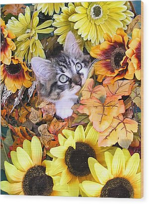 Baby Kitty Cat Munching Fall Leaves - Cute Kitten In Autumn Colors With Sunflowers - Fall Time Wood Print by Chantal PhotoPix