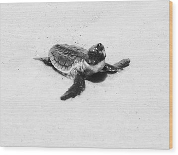 Baby Sea Turtle  Wood Print by Lillie Wilde