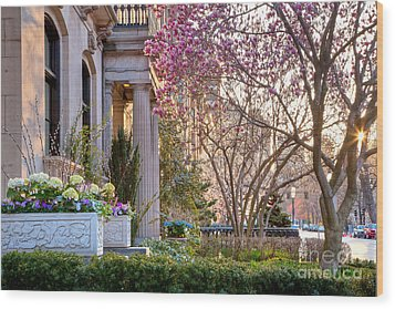Wood Print featuring the photograph Back Bay Spring by Susan Cole Kelly