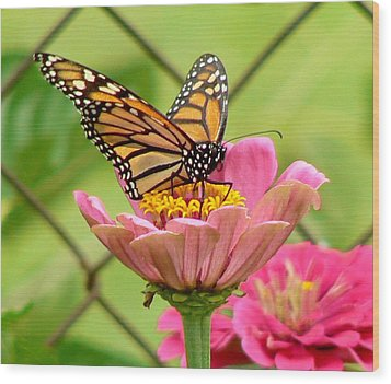 Back Yard Butterfly Wood Print