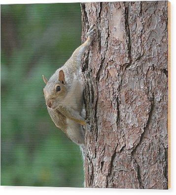 Backyard Squirrel Wood Print