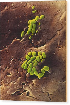 Bacteria On Cooked Roast Beef Wood Print by Dr Jeremy Burgess