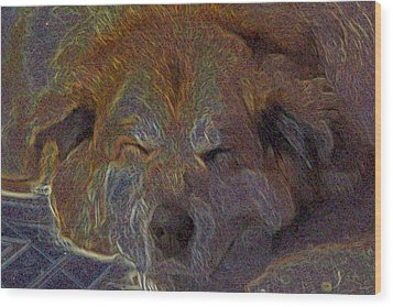 Baily May Wood Print by One Rude Dawg Orcutt