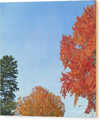 Balance Of Beauty Wood Print by Randy Rosenberger