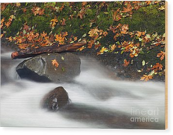 Balance Of The Seasons Wood Print by Mike  Dawson