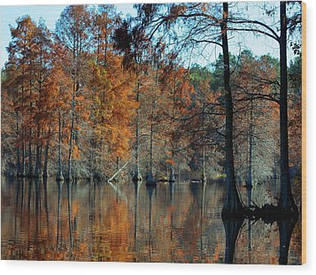 Bald Cypress In Autumn Wood Print