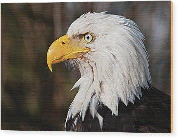 Bald Eagle Wood Print by Chad Graham