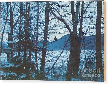 Bald Eagle Haines Alaska Wood Print by Judyann Matthews