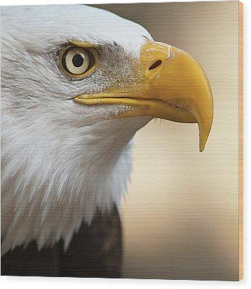 Bald Eagle Wood Print by Jonatan Hernandez Photography