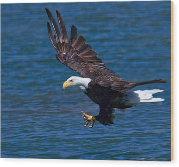 Bald Eagle On The Hunt Wood Print by Beth Sargent