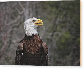 Bald Eagle Wood Print by Sandra Anderson