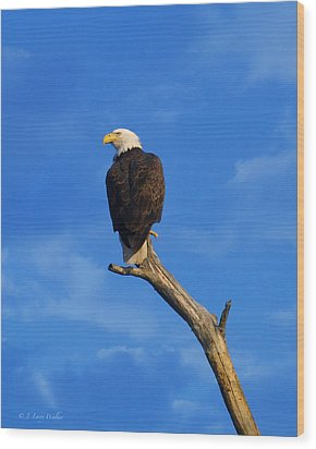 Bald Eagle Sitting High Wood Print