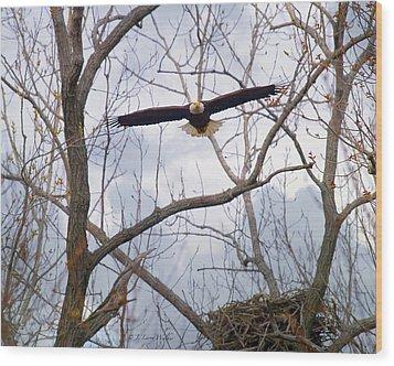 Bald Eagle Soaring Toward Me Wood Print by J Larry Walker