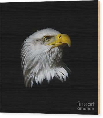 Wood Print featuring the photograph Bald Eagle by Steve McKinzie