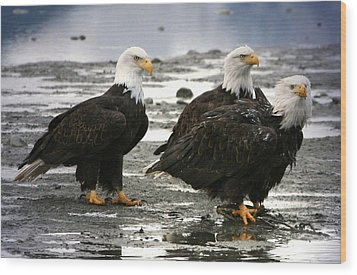 Wood Print featuring the digital art Bald Eagle Trio by Carrie OBrien Sibley
