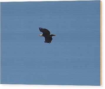 Bald Eagle1 Wood Print