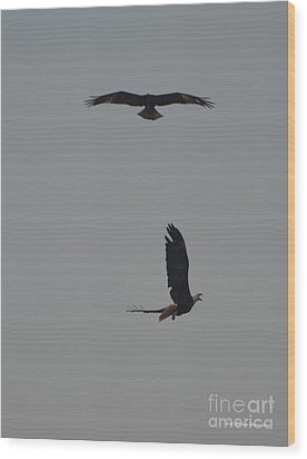 Bald Eagles Wood Print by Gordon Mooneyhan