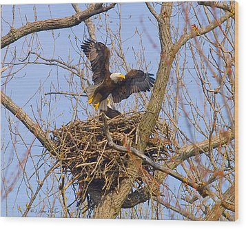 Bald Eagles Nest Wood Print by J Larry Walker