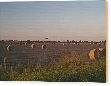 Bales In Peanut Field 10 Wood Print by Douglas Barnett
