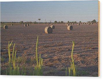 Bales In Peanut Field 12 Wood Print by Douglas Barnett