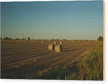 Bales In Peanut Field 13 Wood Print by Douglas Barnett