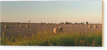 Bales In Peanut Field 8 Wood Print by Douglas Barnett