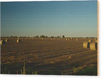 Bales In Peanut Field 9 Wood Print by Douglas Barnett