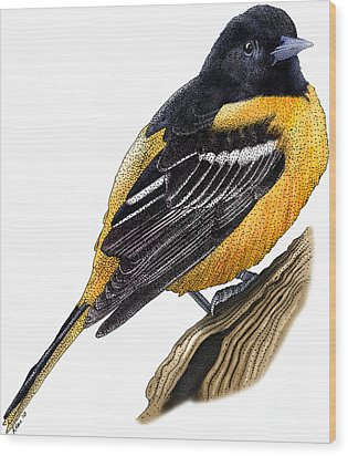Baltimore Oriole Wood Print by Roger Hall and Photo Researchers