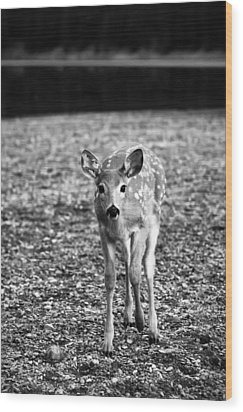 Bambi In Black And White Wood Print by Sebastian Musial