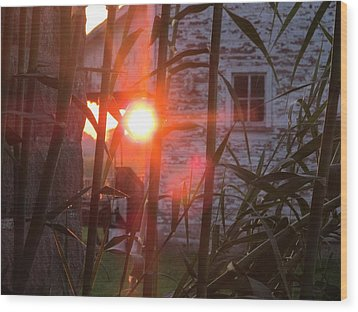 Wood Print featuring the photograph Bamboo Sunrise by Tina M Wenger
