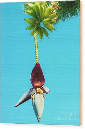 Wood Print featuring the photograph Banana In Full Bloom by Jasna Gopic