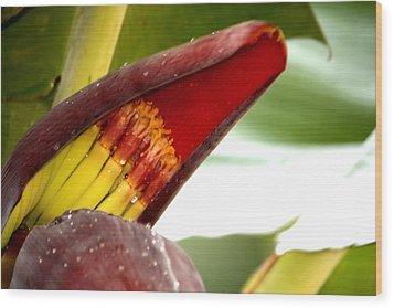 Wood Print featuring the photograph Banana Infants by Karen Nicholson